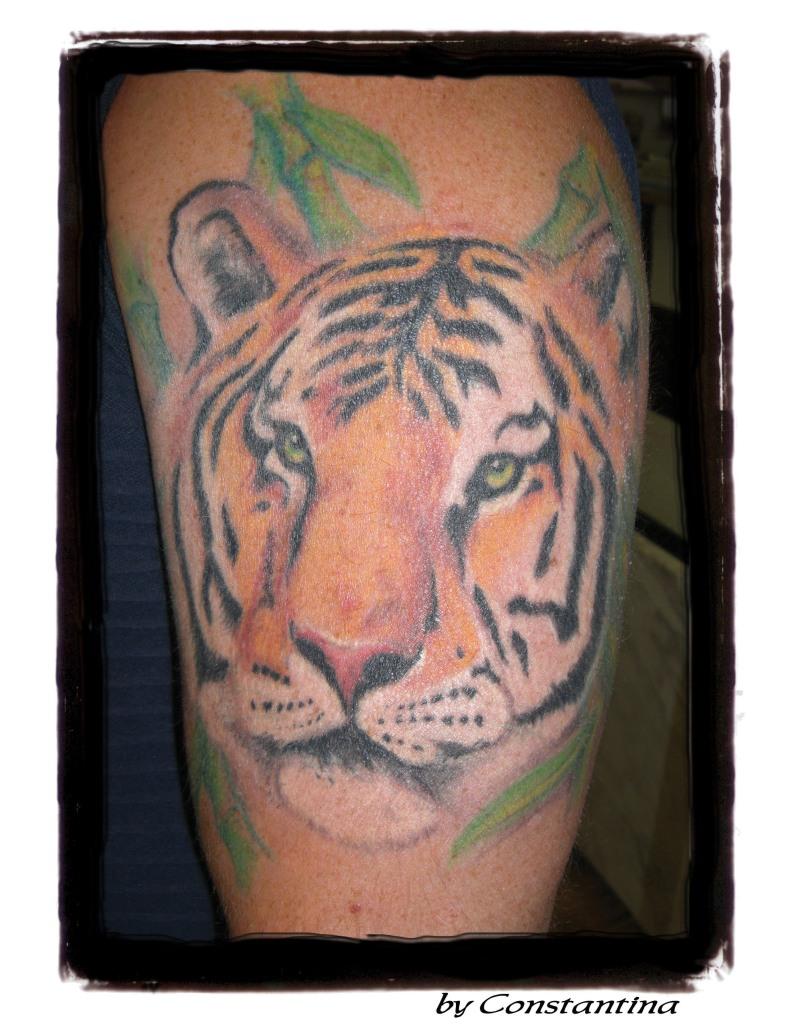 tiger by Constantina Pratsas-Lopez