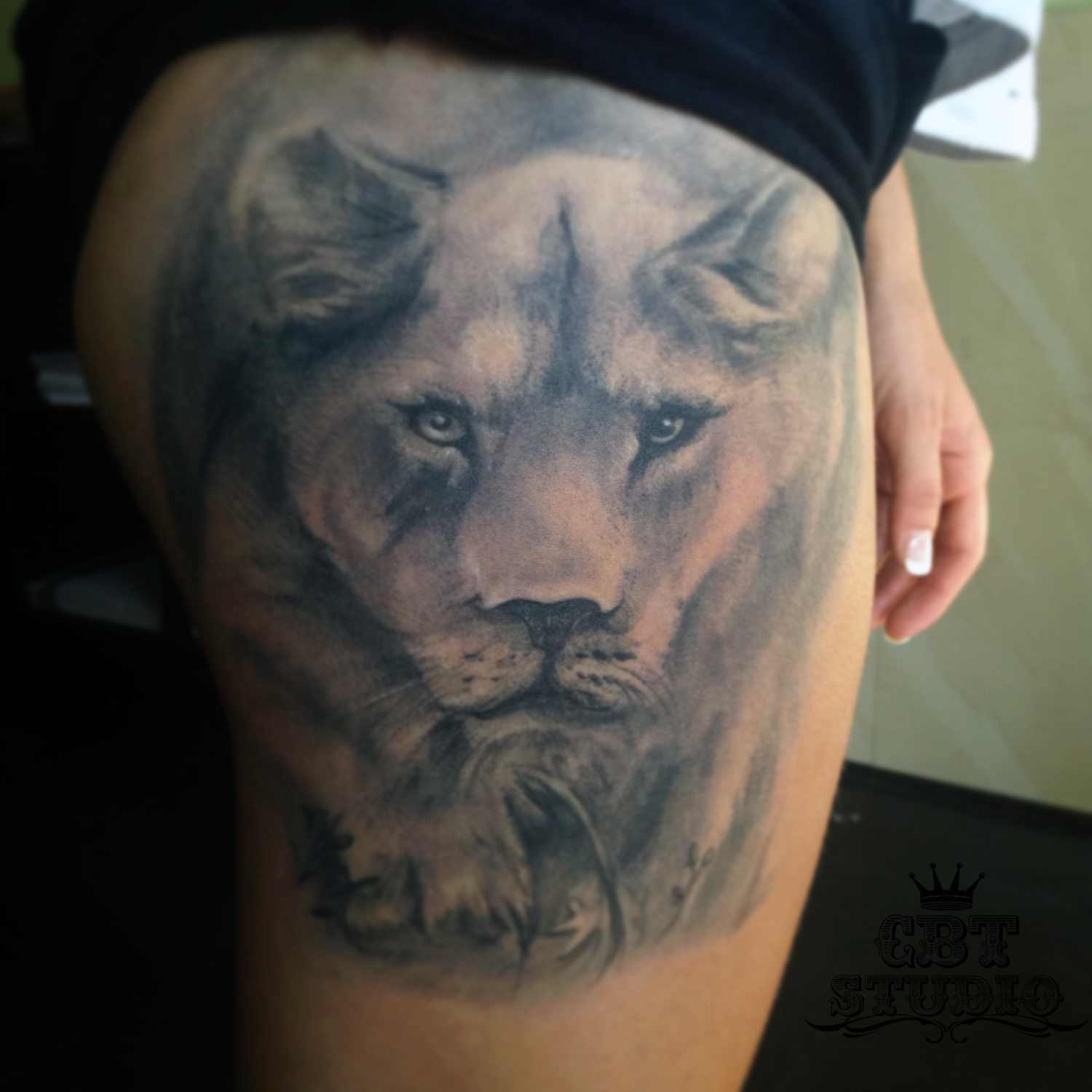 1000 images about tattoos on lioness